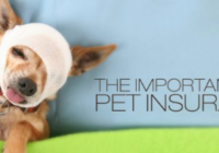 vpi pet insurance login and claim form