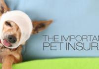 vpi pet insurance login and claim form